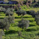 La exportación de aceite oliva en el mundo
