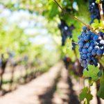 traducciones en el sector vitivinícola